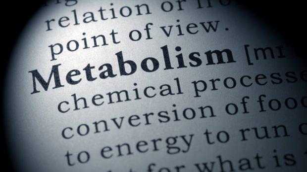 Metabolismo basale: ecco cosa lo influenza. E che ruolo ha la massa muscolare