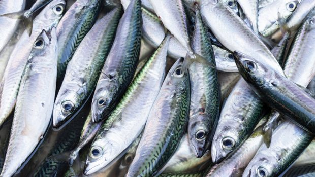 La stagionalità della dieta mediterranea: dalla frutta al pesce, gli alimenti sani dell'inverno