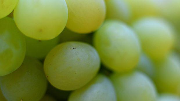 acini d'uva in primo piano